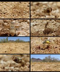 蜜蜂飞进洞视频