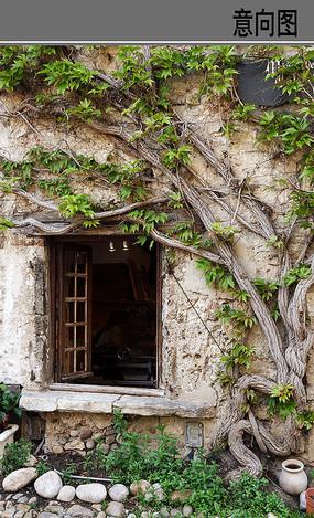 小镇窗口植物墙景 JPG