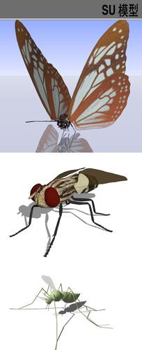 3D动物昆虫类SU模型合集