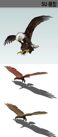 3D动物鹰类SU模型合集
