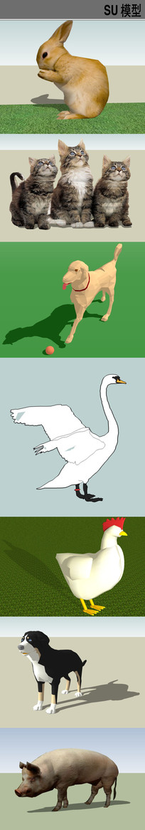 3D家禽宠物类SU模型合集
