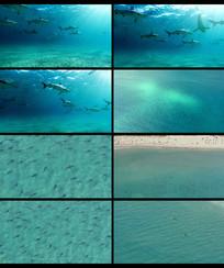 海洋海底鲨鱼视频