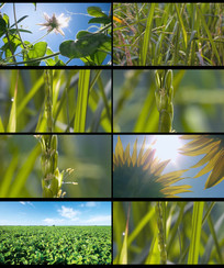 农业农作物水稻稻田视频