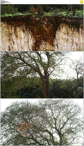 崖壁上的树木实拍视频素材