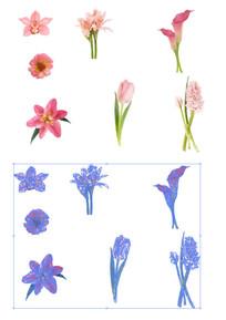 矢量花朵素材