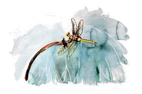荷叶蜻蜓插画 PSD