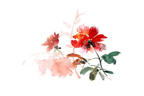 红色的花插画 PSD