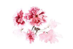 红色的花朵插画 PSD