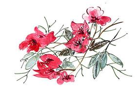 红色的叶子插画 PSD