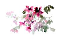 鲜嫩的花朵插画