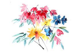 鲜艳的花朵插画 PSD