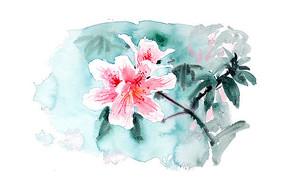 绽放的花插画 PSD