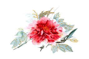 绽放的花朵插画 PSD