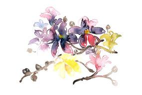 装饰花卉插画 PSD