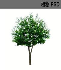 白蜡PSD素材 PSD