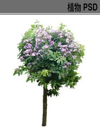 大叶紫薇PSD植物素材 PSD