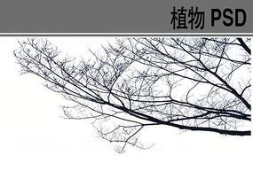 冬景树PSD前景树素材