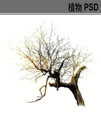 冬景树PSD素材 PSD