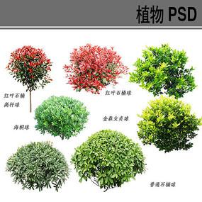 灌木球PSD分层植物