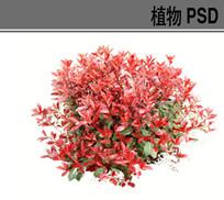 红叶石楠球PSD素材 PSD