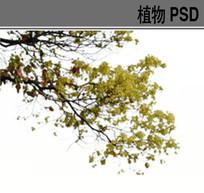 后期效果前景树PSD素材 PSD