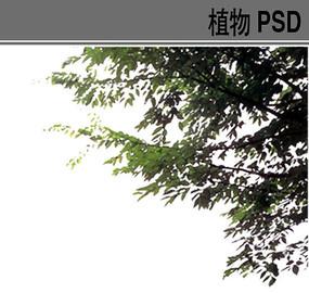 后期效果图PSD前景树素材