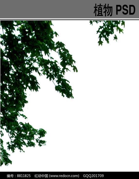 落叶乔木PSD前景树素材图片