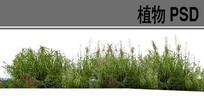 芦苇丛ps植物素材 PSD