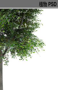 前景树ps植物素材 PSD