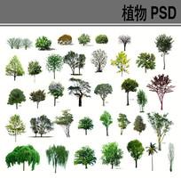 乔木PSD分层素材