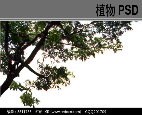 乔木PSD前景树素材图片
