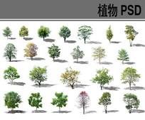乔木植物psd分层素材 PSD