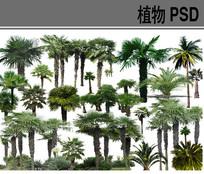 热带植物ps素材