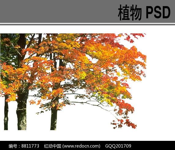 竹子ps素材psd素材下载 植物设计图片图片