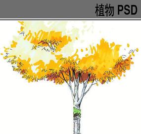 色叶植物手绘PS素材