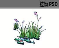 水生植物手绘PS素材