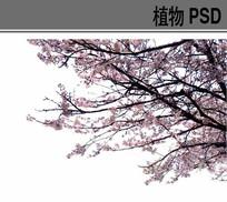 桃花PSD前景树素材