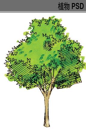 行道树手绘ps素材