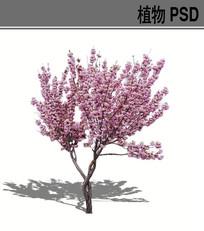 樱花PSD素材 PSD