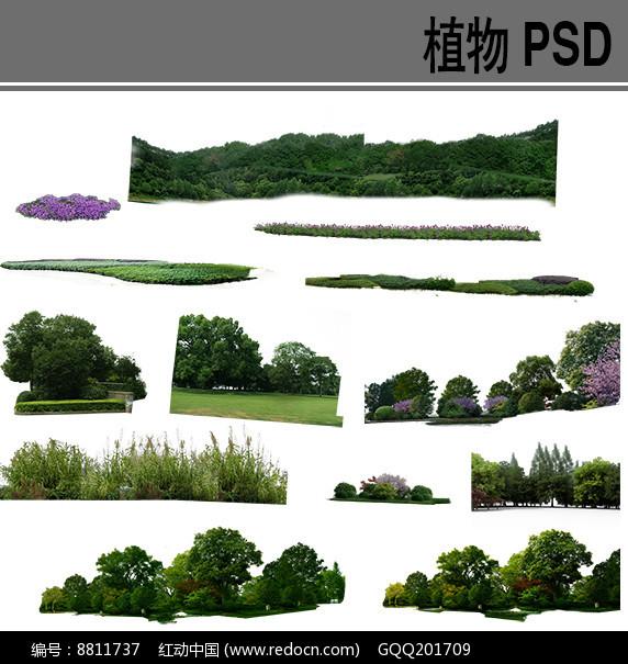 植物组团ps素材图片