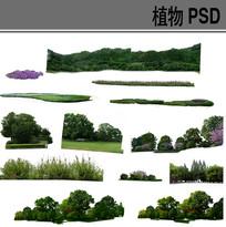 植物组团ps素材 PSD