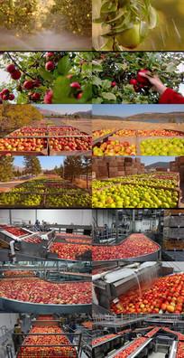 水果食品企业宣传片动态视频