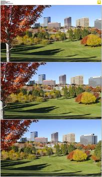 秋天的草坪和建筑实拍视频素材