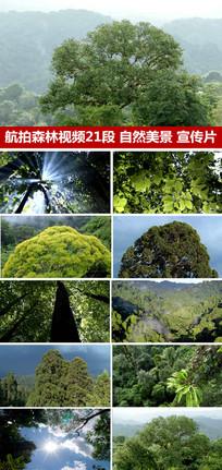 航拍森林树木视频绿色森林视频