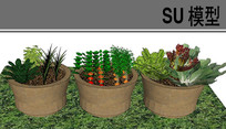 蔬菜盆栽SU模型
