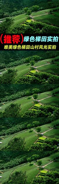 唯美绿色梯田山村风光实拍视频