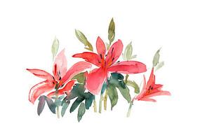 红色花朵插画 PSD