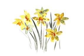 黄色花朵插画 PSD