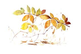 黄色叶子插画 PSD