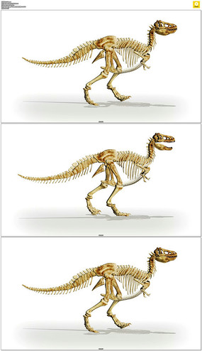 四足动物行走动画